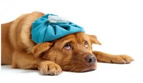 Compassion Fatigue: Less compassion, expanded empathy?